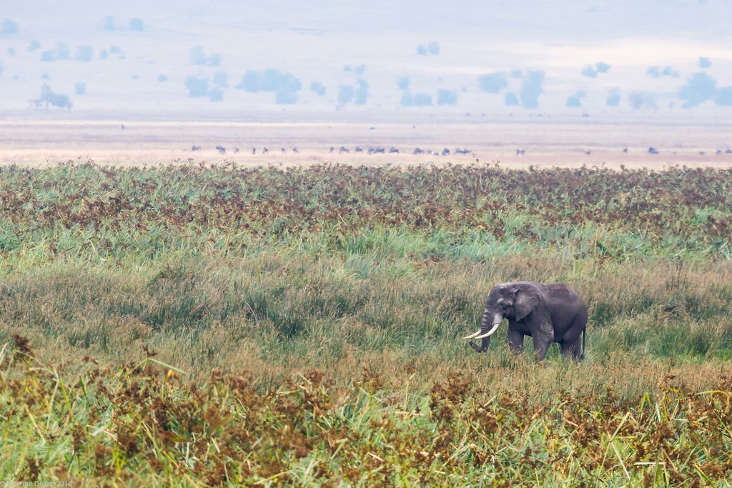 Ngorongoro_18sep18_03_elefant4