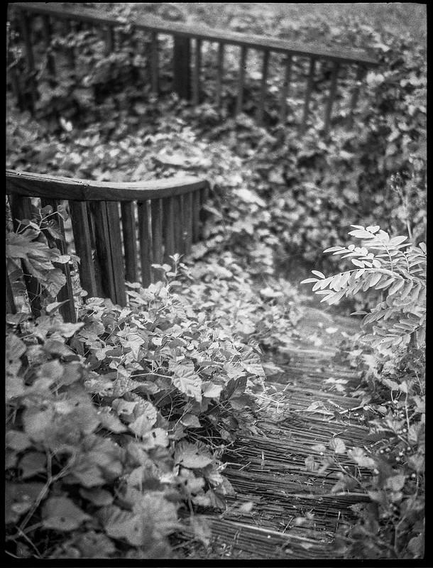 wooden steps, railings, overgrown, urban decay, River Arts District, Asheville, NC, Zenobia,  Kodak TMAX 400, Ilford Ilfosol 3 developer,10.29.18