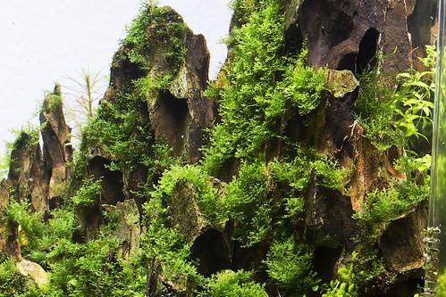 vivarium mountain aquascape nigel hoevenaar | by nigel_kh