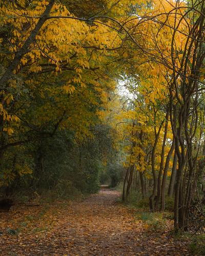 asylumlakepreserve kalamazoocounty michigan unitedstates autumn cold dark fall kalamazoo outdoor overcast park path trail sassafras yellow landscape tunnel us explored
