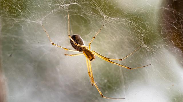 Araignée macro-1050584