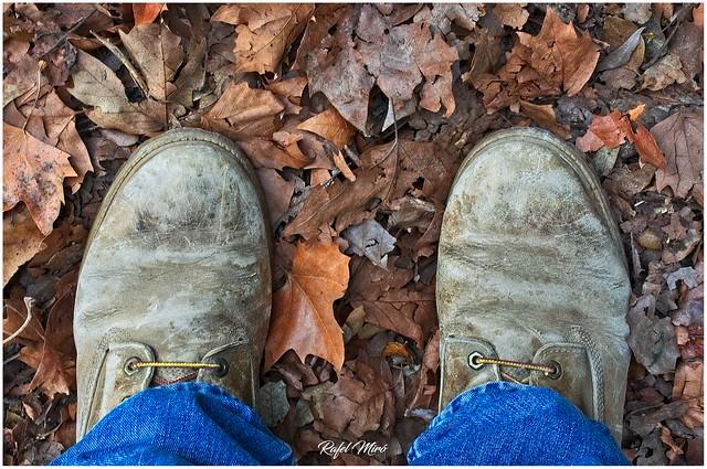 La tardor sota els meus peus 🍁