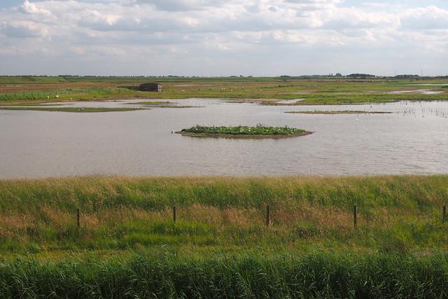 Frampton Marsh
