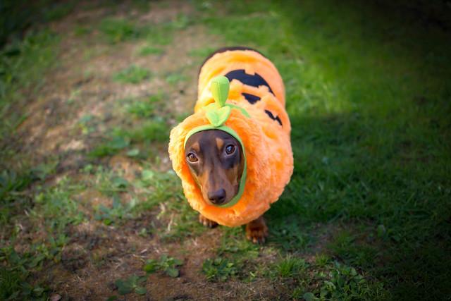 Little Pumpkin [Explored]
