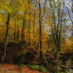 Pontburn Wood