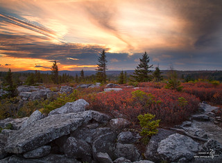 Bear Rocks Wilderness, Dolly Sods, WV | by Z!@