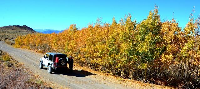 Autumn - Bodie Masonic Road, California