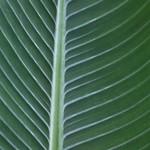 Leaf / 葉(は)
