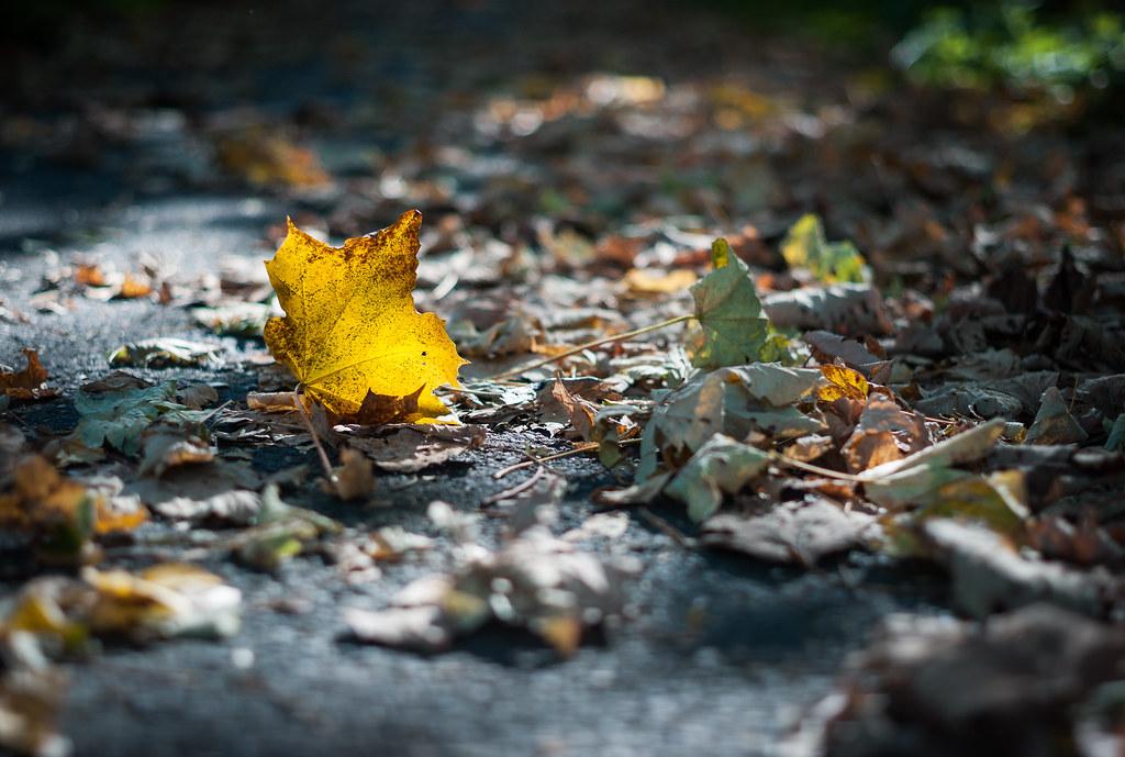 Autumn leaves on my way