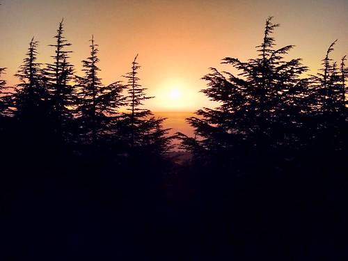 projectweather landscape tree sunset reserve barouk cedaroflebanon