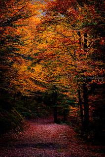 Fall in love   by Mario Graziano