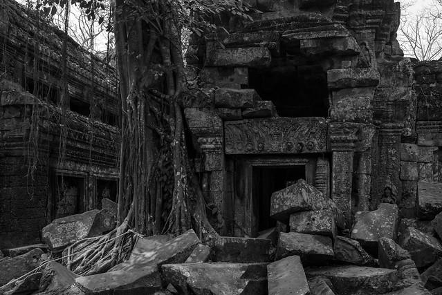 Prasat Ta Prohm (ប្រាសាទតាព្រហ្ម), , Siem Reap, Cambodia