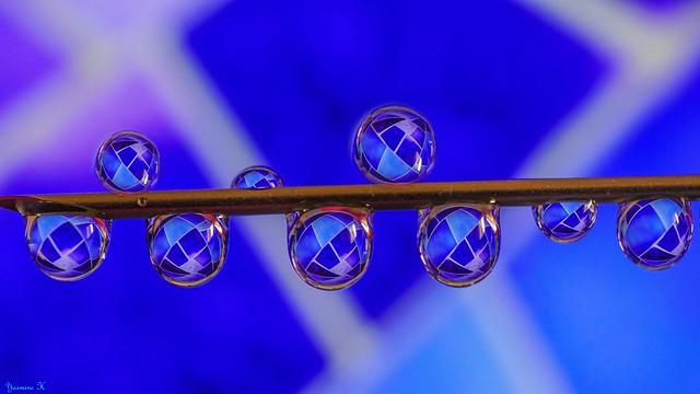 Macro in Blue - 5918