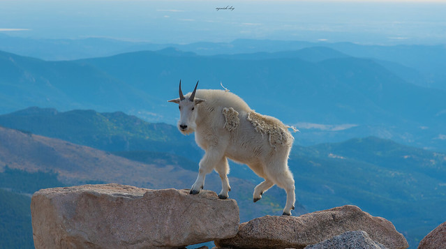Climbing the Summit