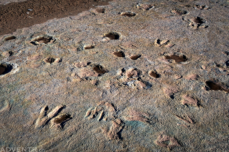 Mill Canyon Dinosaur Tracks