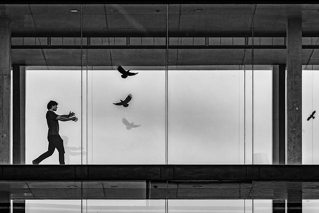 Catching the Birds