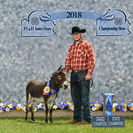 Blair - Aaron Bowman - 4 Yr Long   Ears Gelding - Grand Champion Long Ears Gelding - 1318