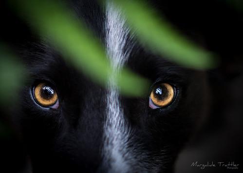 Eyes in the dark | by Margalide Balto