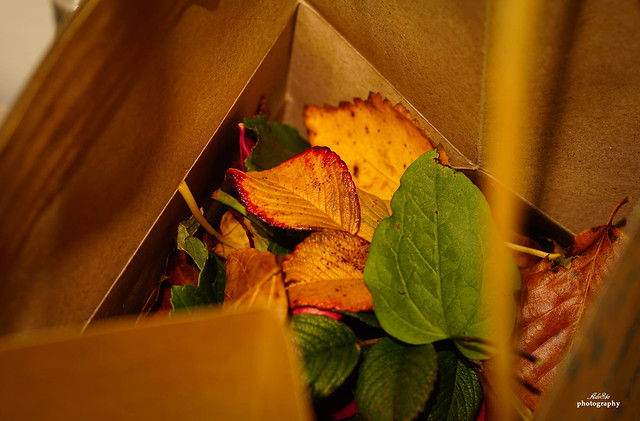 Autumn in a paper bag