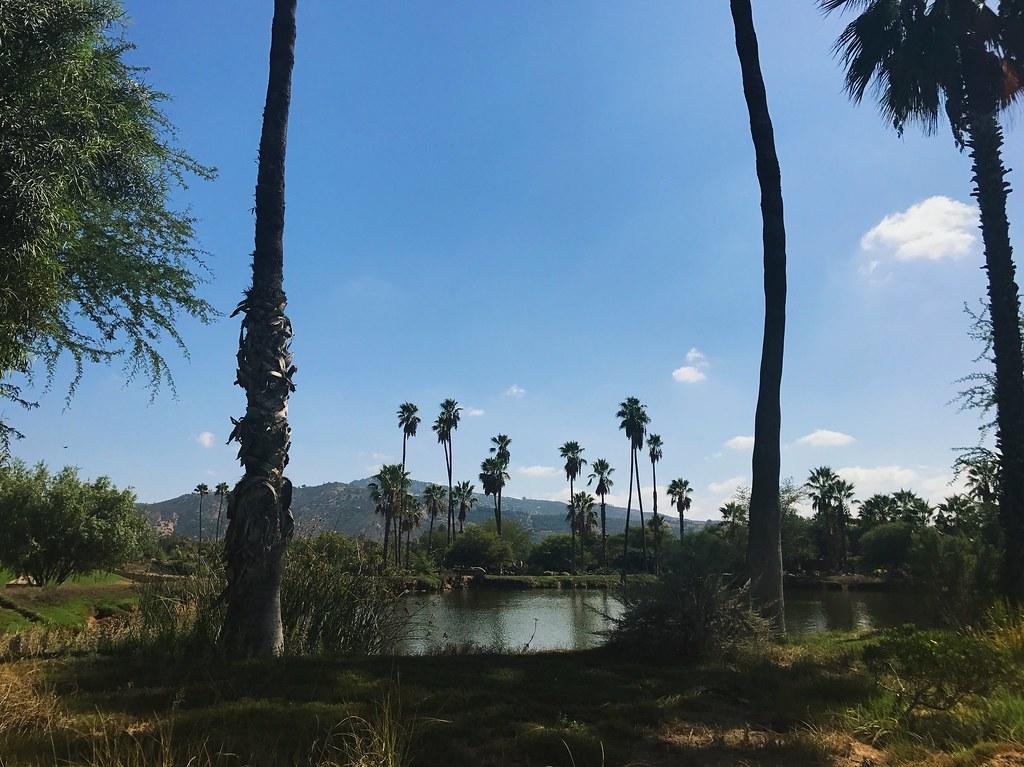 San Diego Safari landscape with trees