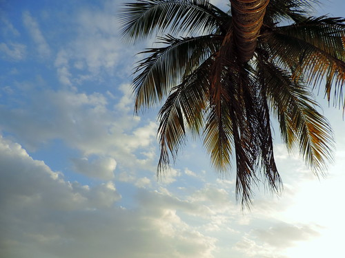 nikon coolpix p520 malaysia langkawi cenangbeach nature outdoor closeup plant palm tree leaf leaves foliage fern sky cloud green blue brown white بحر