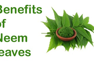 Outstanding-Benefits-Of-Neem-For-Your-Hair1-702x459 | by healthpress.co