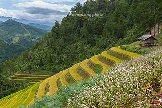 _J5K2502.0918.Dế Xu Phình.Mù Cang Chải.Yên Bái. | by hoanglongphoto