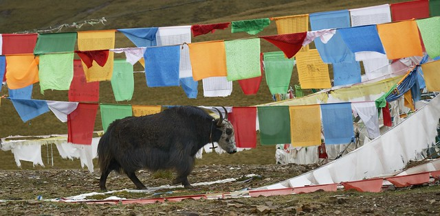 Prayer flags at La-me Latse Pass, Tibet 2018