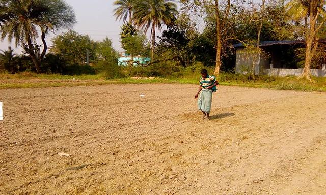 Spray pendimethalin in lentil field at Sasya Shyamala Kvk farm