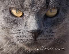 Le chat : Michel NOËL © 2018-6266.jpg