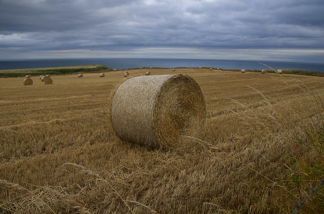 Hay bale by the coast.