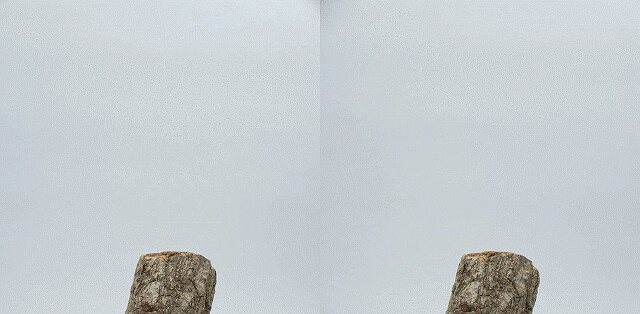 Psacothea hilaris taking off, stereo parallel view, gif animation