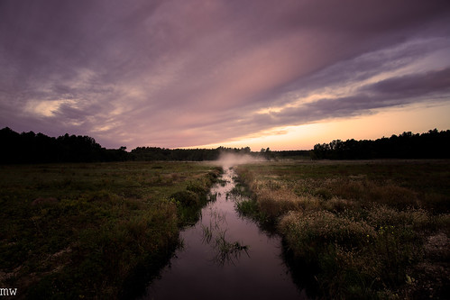 cranberry bog carlise massachusetts dawn