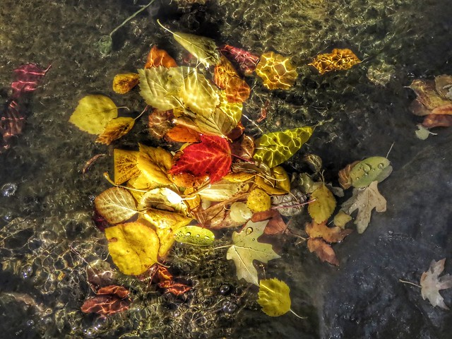 Leaves Gather (reflection below)