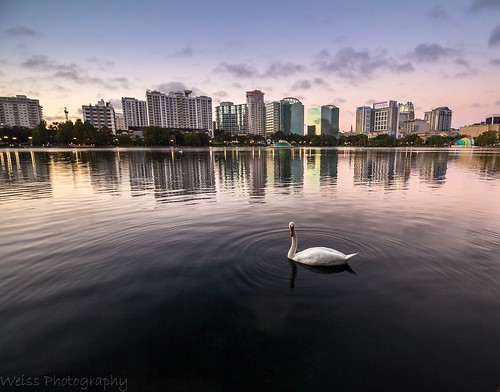 cloud cloudheaven cloudporn colorfulclouds sky skyline cityscape landscapephoto landscapephotographer sunriselovers sunriseheaven buildings architecture citylive swan animal lookingatme water downtownorlando city boat sea building bird river