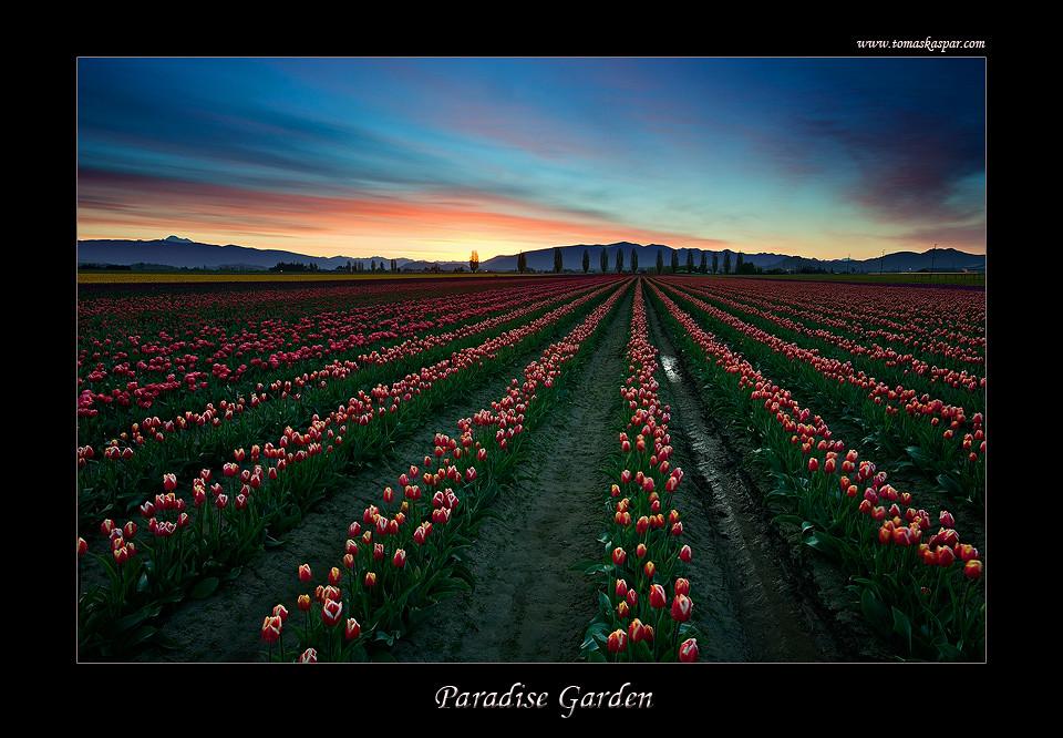 Paradise Garden | Beautiful morning over the Skagit Valley ...