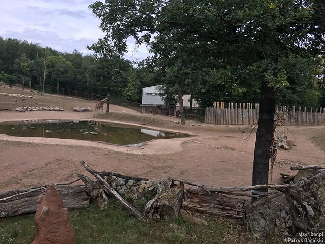 Ogród Zoologiczny, Brno, Czechyo Brno, Czechy 2018.06.25 15_47 (4032x3024) 080