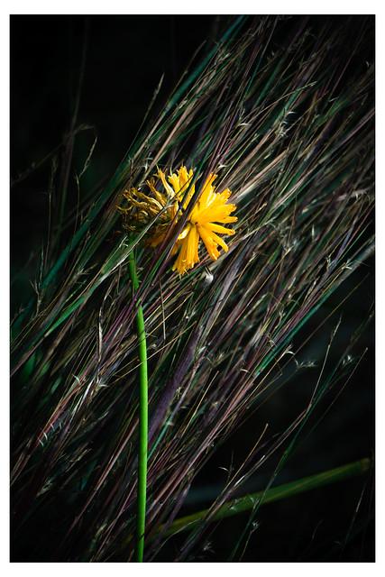 Single Orange Flower Caught in Reeds - Chanticleer - Wayne PA_Web 1_Scaled