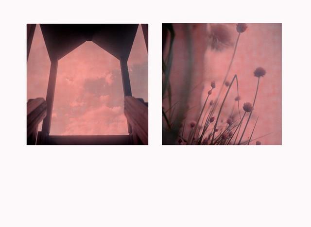 """""""Qui, fiorisce"""" (Serie 2 di 2)"""