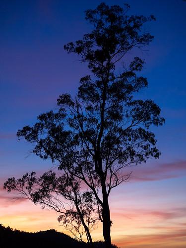 hortonplainsparcnational asie continentsetpays srilanka asia hortonplainsnationalpark lk lka ohiya uvaprovince