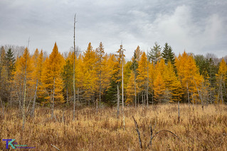 Tamaracks-6459 | by Tim_NEK