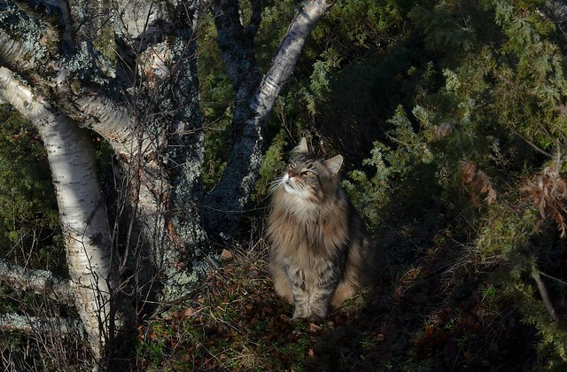 elvis i skogen