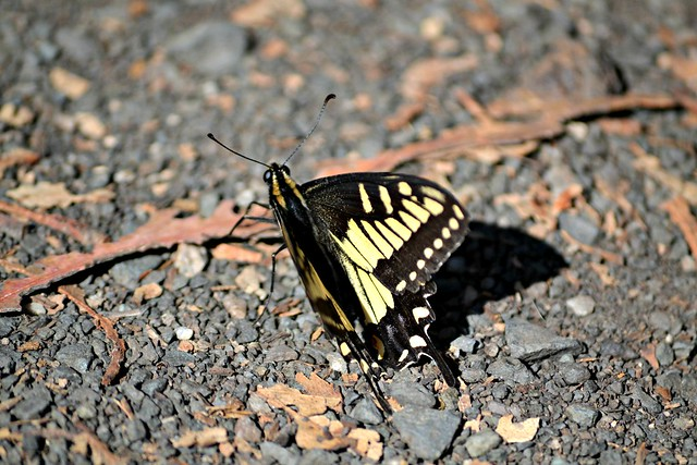 Yellow Flutter By