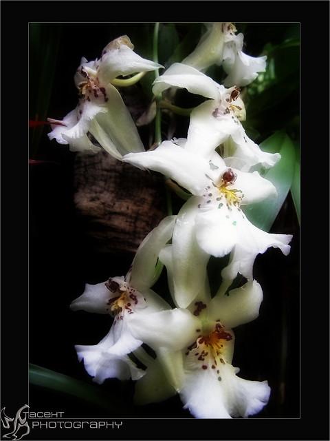 Mistic Flower
