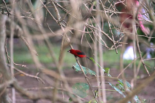 Vermelho (Red)