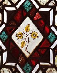primrose (15th century)