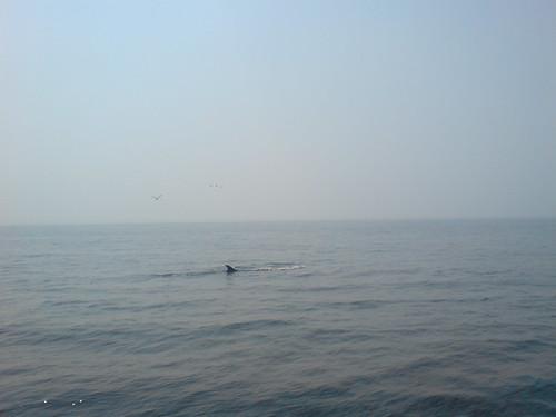 whale   by Darren Foreman