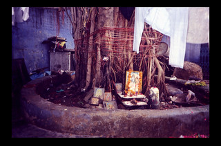 Under Tree Linga by Richard Lazzara SHANKAR | by shankargallery