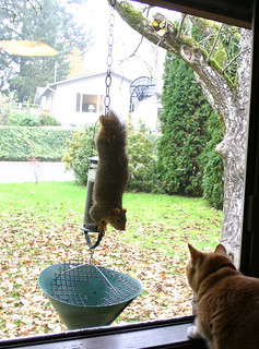 The Cat and the Squirrel | by Major Clanger