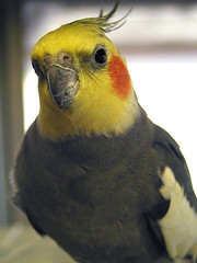 Bird   by Arlette